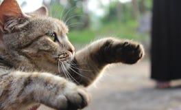 καφετιά αγάπη απεικόνισης καρδιών γατών Στοκ φωτογραφίες με δικαίωμα ελεύθερης χρήσης