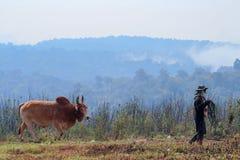 Καφετιά αγελάδα και Farmer στοκ φωτογραφίες με δικαίωμα ελεύθερης χρήσης