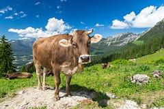 Καφετιά αγελάδα στο τοπίο βουνών στοκ εικόνες
