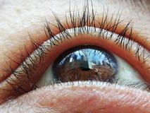Καφετιά αντανάκλαση ματιών στοκ εικόνες