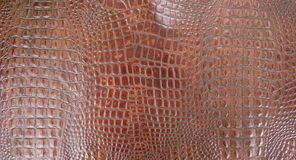 Καφετιά αποτυπωμένη σε ανάγλυφο σύσταση δέρματος Gator κονιάκ στοκ φωτογραφία με δικαίωμα ελεύθερης χρήσης