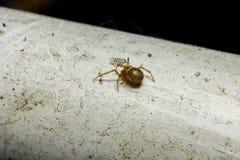 Καφετιά αράχνη στους άσπρους παλαιούς σωλήνες στοκ φωτογραφία