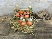 Καφετιά αυγά και ανθρώπινο κρανίο Στοκ Εικόνες
