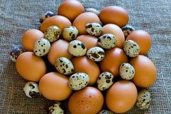 Καφετιά αυγά κοτόπουλου και ζωηρόχρωμα αυγά ορτυκιών Στοκ Εικόνα