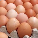 Καφετιά αυγά κοτόπουλου Στοκ εικόνα με δικαίωμα ελεύθερης χρήσης