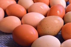 Καφετιά αυγά ναυπηγείων, υγρά Στοκ εικόνες με δικαίωμα ελεύθερης χρήσης