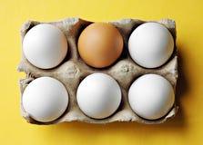 καφετιά αυγά πέντε χαρτοκιβωτίων ένα ανοικτό λευκό Στοκ Εικόνες