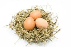 Καφετιά αυγά σε μια φωλιά  Στοκ Εικόνα