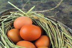 Καφετιά αυγά στα αυγά κοτών φωλιών Στοκ εικόνες με δικαίωμα ελεύθερης χρήσης
