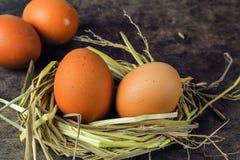 Καφετιά αυγά στα αυγά κοτών φωλιών Στοκ εικόνα με δικαίωμα ελεύθερης χρήσης