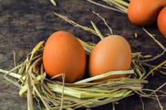 Καφετιά αυγά στα αυγά κοτών φωλιών Στοκ φωτογραφίες με δικαίωμα ελεύθερης χρήσης