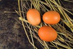 Καφετιά αυγά στα αυγά κοτών φωλιών Στοκ Φωτογραφία