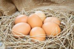 Καφετιά αυγά στο σανό Στοκ εικόνες με δικαίωμα ελεύθερης χρήσης