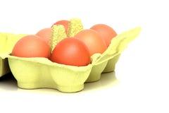 καφετιά αυγά φρέσκα Στοκ φωτογραφίες με δικαίωμα ελεύθερης χρήσης