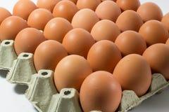 Καφετιά αυγά χώρας Στοκ Εικόνα