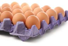 καφετιά αυγά Στοκ Εικόνα