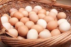 Καφετιά αυγά Στοκ φωτογραφία με δικαίωμα ελεύθερης χρήσης