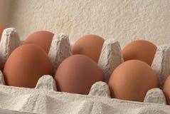 καφετιά αυγά Στοκ Εικόνες