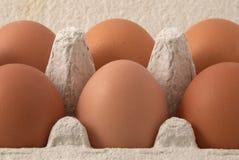 καφετιά αυγά Στοκ Φωτογραφία