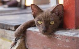 Καφετιά γάτα που βρίσκεται σε ένα ξύλινο πάτωμα Στοκ φωτογραφία με δικαίωμα ελεύθερης χρήσης