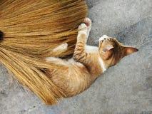 Καφετιά γάτα που παίζει την ασιατική σκούπα αχύρου στοκ εικόνες