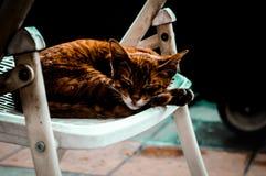 καφετιά γάτα Στοκ φωτογραφία με δικαίωμα ελεύθερης χρήσης