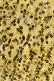καφετιά δαντέλλα στο άσπρο υπόβαθρο που εισάγει την καινοτομία της δαντέλλας μ στοκ φωτογραφία