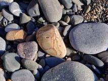 καφετιά ιδανική άνευ ραφής σύσταση πετρών ανασκόπησης Στοκ Εικόνα