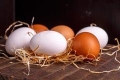 Καφετιά και άσπρα αυγά κοτόπουλου Στοκ εικόνες με δικαίωμα ελεύθερης χρήσης