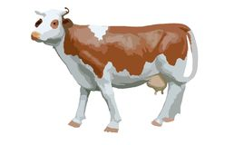 Καφετιά και άσπρη αγελάδα, πλάγια όψη, που απομονώνεται Στοκ Εικόνες