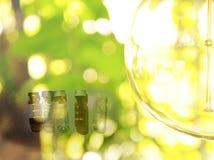 Καφετιά και σαφή φιαλίδια για το εργαστήριο επιστήμης με πράσινους φυσικό και το rou Στοκ φωτογραφίες με δικαίωμα ελεύθερης χρήσης