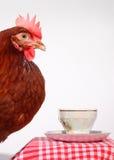 καφετιά κότα φλυτζανιών καφέ Στοκ εικόνες με δικαίωμα ελεύθερης χρήσης