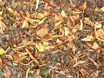 Καφετιά ξηρά φύλλα Στοκ εικόνα με δικαίωμα ελεύθερης χρήσης