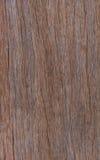Καφετιά ξύλα Στοκ Εικόνες