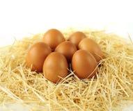Καφετιά οργανικά αυγά στο άχυρο Στοκ Φωτογραφίες