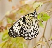 καφετιά πεταλούδα fritillary Στοκ φωτογραφία με δικαίωμα ελεύθερης χρήσης