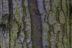 Καφετιά πράσινη υλική δομή δέντρων στοκ φωτογραφία με δικαίωμα ελεύθερης χρήσης