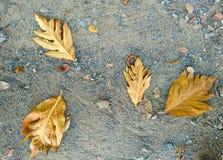 Καφετιά πτώση φύλλων στο έδαφος Στοκ φωτογραφία με δικαίωμα ελεύθερης χρήσης