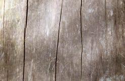 καφετιά στενή σύσταση επάνω στο δάσος στοκ φωτογραφία με δικαίωμα ελεύθερης χρήσης