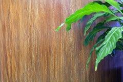 Καφετιά σύσταση στην ανακούφιση ενός κάθετου, ρηχού λωρίδας και της houseplant Calla Διακοσμητικό επίστρωμα για τους τοίχους στοκ φωτογραφία με δικαίωμα ελεύθερης χρήσης