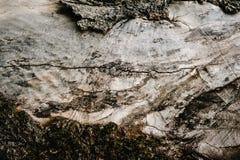 Καφετιά σύσταση του παλαιού ξύλου Ξύλινα ταπετσαρία και textu υποβάθρου Στοκ φωτογραφίες με δικαίωμα ελεύθερης χρήσης