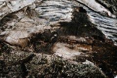 Καφετιά σύσταση του παλαιού ξύλου Ξύλινα ταπετσαρία και textu υποβάθρου Στοκ Φωτογραφία