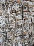 Καφετιά σύσταση 02 φλοιών δέντρων ρωγμή υποβάθρου στοκ εικόνες με δικαίωμα ελεύθερης χρήσης