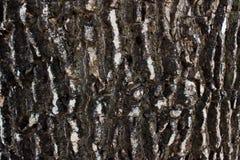 Καφετιά σύσταση φλοιών δέντρων στοκ φωτογραφίες με δικαίωμα ελεύθερης χρήσης