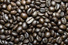 Καφετιά φασόλια καφέ ψητού υποβάθρου στενή μακροεντολή μυγών λουλουδιών που στηρίζεται επάνω Στοκ Φωτογραφία