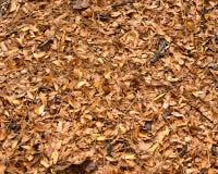 Καφετιά φύλλα πτώσης ` s Στοκ φωτογραφία με δικαίωμα ελεύθερης χρήσης