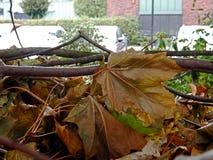 Καφετιά φύλλα στο έδαφος πριν από το βιομηχανικό κτήριο στοκ εικόνα