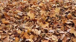 Καφετιά φύλλα φθινοπώρου Στοκ φωτογραφίες με δικαίωμα ελεύθερης χρήσης