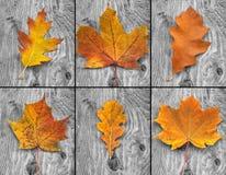 καφετιά φύλλα Στοκ εικόνα με δικαίωμα ελεύθερης χρήσης