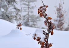 Καφετιά φύλλα οξιών στον πάγο Στοκ Φωτογραφίες